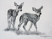 2 Fawns