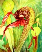 Cobra Lilly