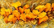 Symphony for Chanterelle